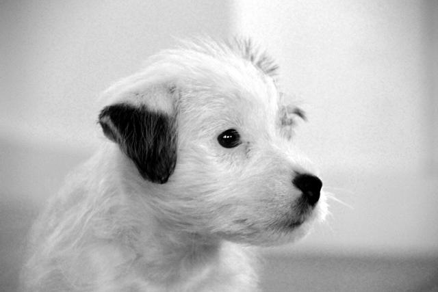 Controle hondenbezit