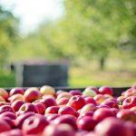 Bijeenkomst extra ontsluiting Fruit NL