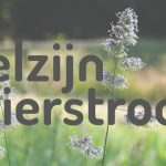 Ple(x)ziertours: Een zomers reisbureau voor ouderen in de gemeente Buren