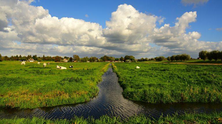 Gemeente Buren start met verkoop van restgroen in Lienden